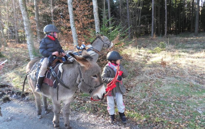 Location de vacances - Gîte à Le Soulié - Balade avec les ânes