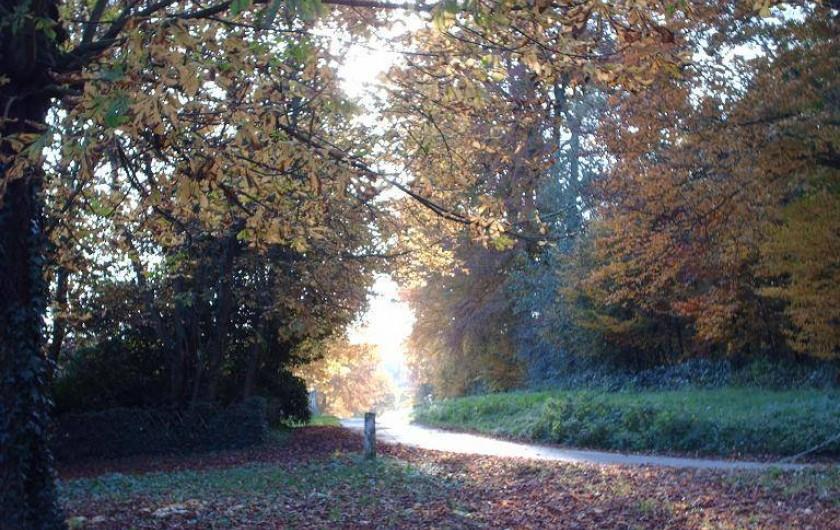 Location de vacances - Cabane dans les arbres à Saint-Germain-des-Essourts - Sous-bois en automne