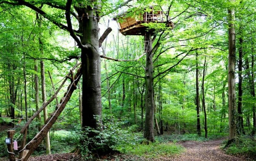 """Location de vacances - Cabane dans les arbres à Saint-Germain-des-Essourts - Cabane """"Berceau"""""""