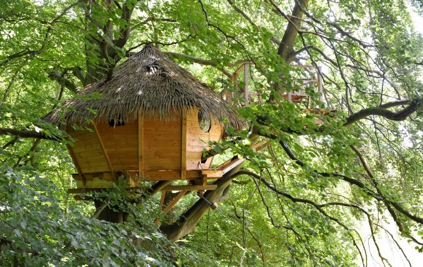 """Location de vacances - Cabane dans les arbres à Saint-Germain-des-Essourts - Cabane """"Grand Hêtre"""""""