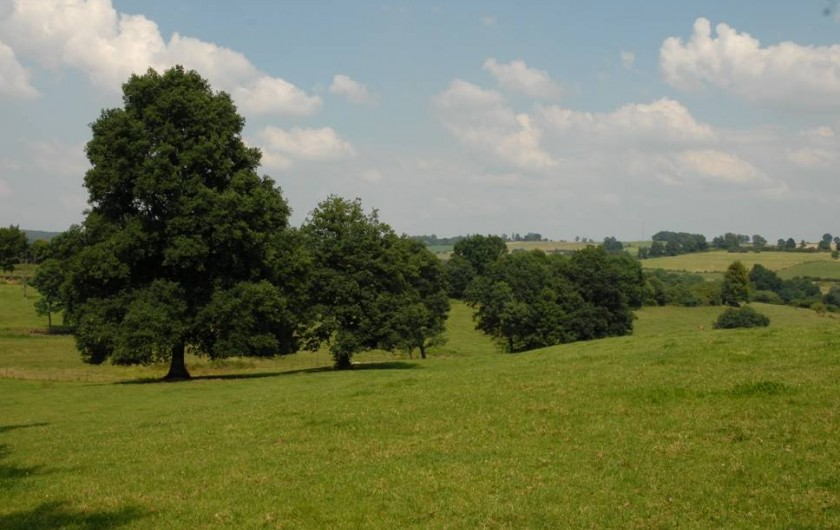 Location de vacances - Cabane dans les arbres à Signy-l'Abbaye - point de vue de la Ruche