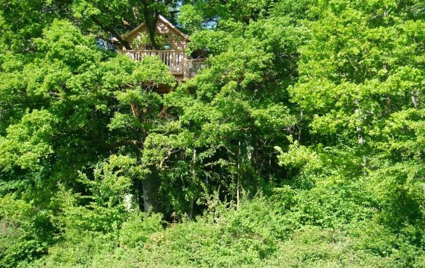 Location de vacances - Cabane dans les arbres à Signy-l'Abbaye - La héronnière vue de la pâture