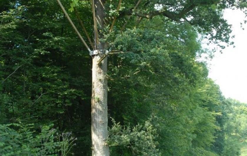 Location de vacances - Cabane dans les arbres à Signy-l'Abbaye - La Lisière