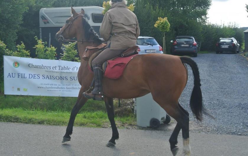 Location de vacances - Chambre d'hôtes à Fauvillers - Chevaux et cavaliers bienvenus