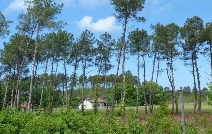 Location de vacances - Appartement à Saint-Julien-en-Born