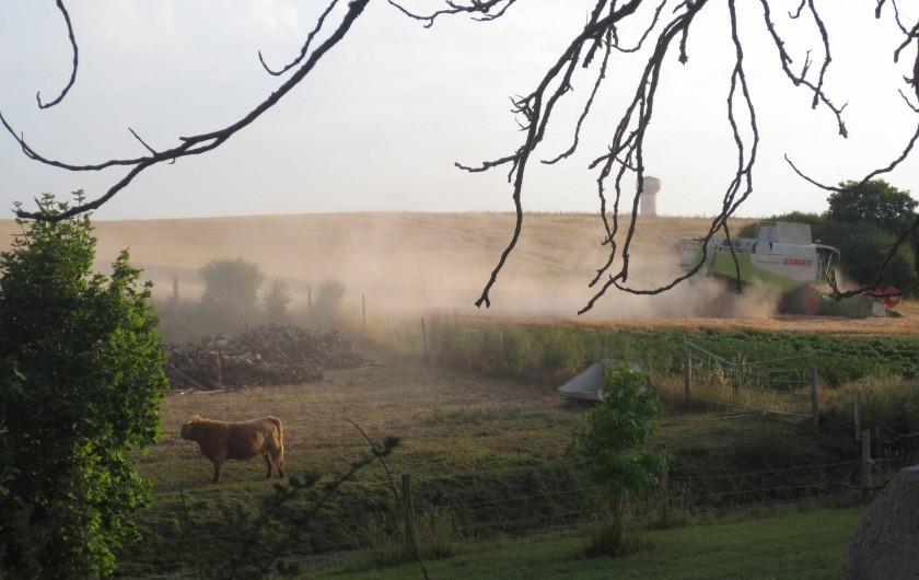 Location de vacances - Chambre d'hôtes à Landes-le-Gaulois - Jason (boeuf Highland Cattle) dans so pré pendant la moisson