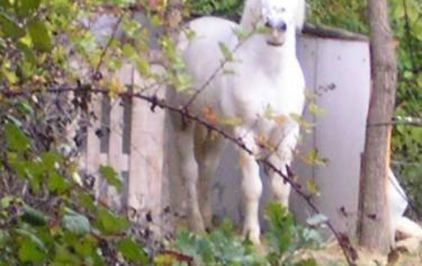 Location de vacances - Gîte à Vinsobres - Ulysse le poney
