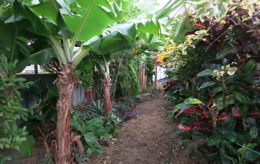 Location de vacances - Appartement à Le Gosier - Jardin côté est