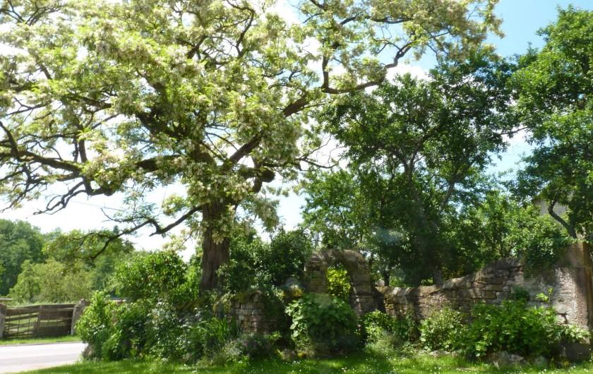 Location de vacances - Chambre d'hôtes à Bertrambois - L'acacia bicentenaire.