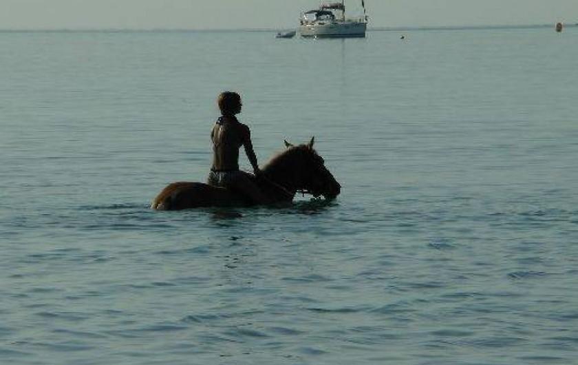 Location de vacances - Appartement à Porto-Vecchio - Balade à cheval sur la plage...