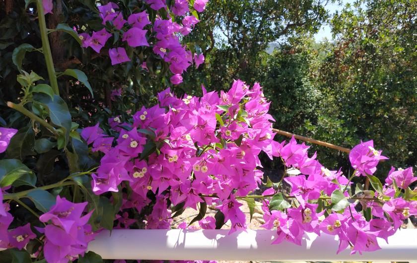 Location de vacances - Villa à Favone - Chambre à 4,50 m de la piscine pour le plongeon matinal ...