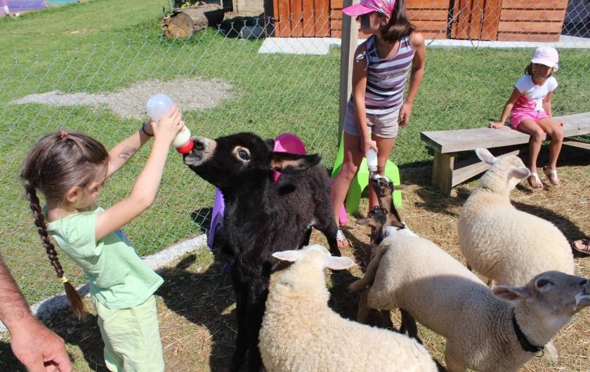 Location de vacances - Appartement à Pouillon - Parfois, ce sont les enfants qui donnent le biberon aux animaux.