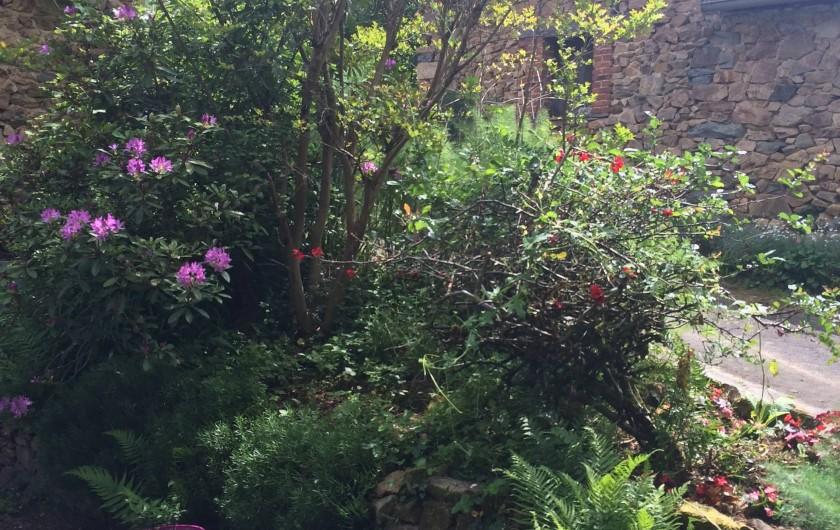 Location de vacances - Gîte à Laguenne - Les premiers Rhododendrons : ce n'est qu'un début !!!