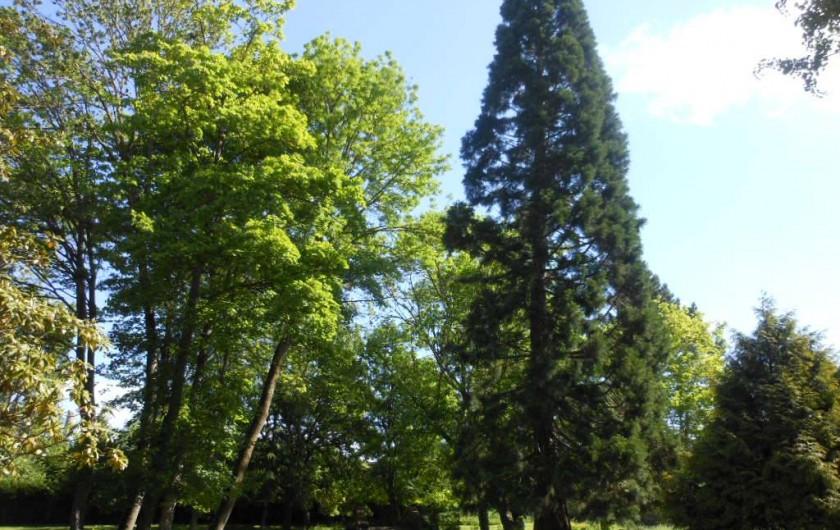 Location de vacances - Chambre d'hôtes à Bailleau-Armenonville - Parc du Manoir
