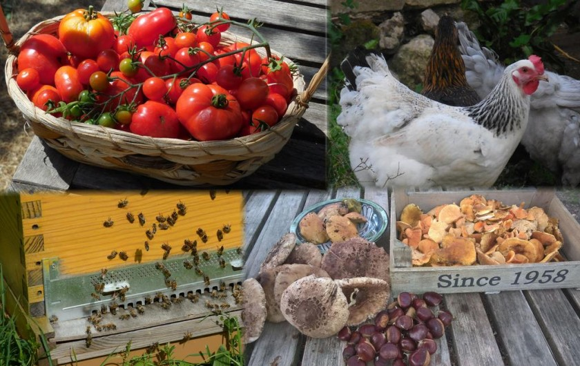 Location de vacances - Chambre d'hôtes à Laruscade - Les produits du jardin et de notre ruche