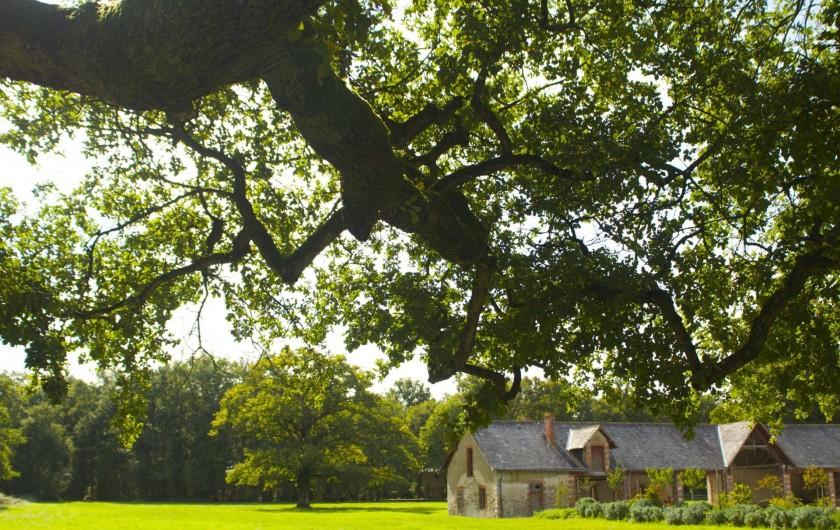 Location de vacances - Insolite à Saint-Georges-des-Sept-Voies - ECOLODGE DE LOIRE  CABANE DANS LES ARBRES. ACCUEIL