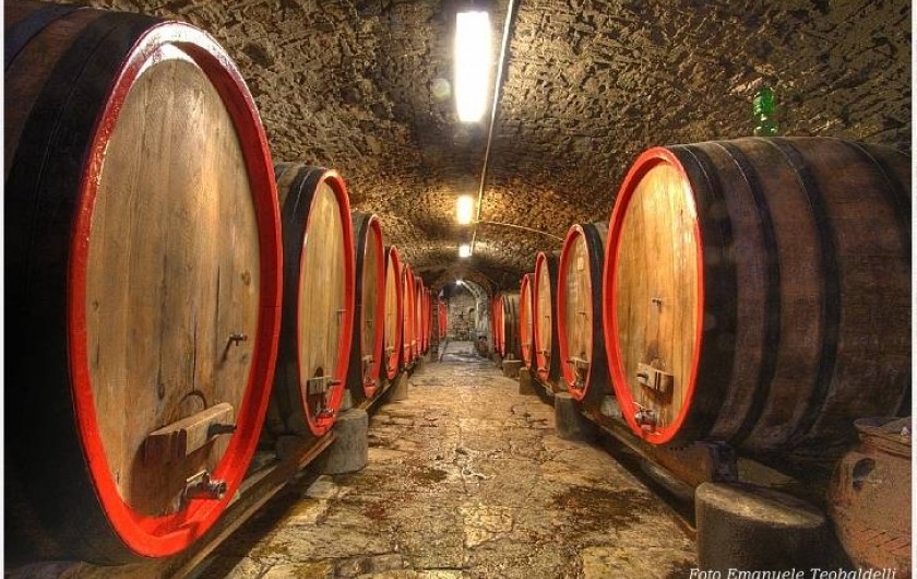 wine cellars in the castle
