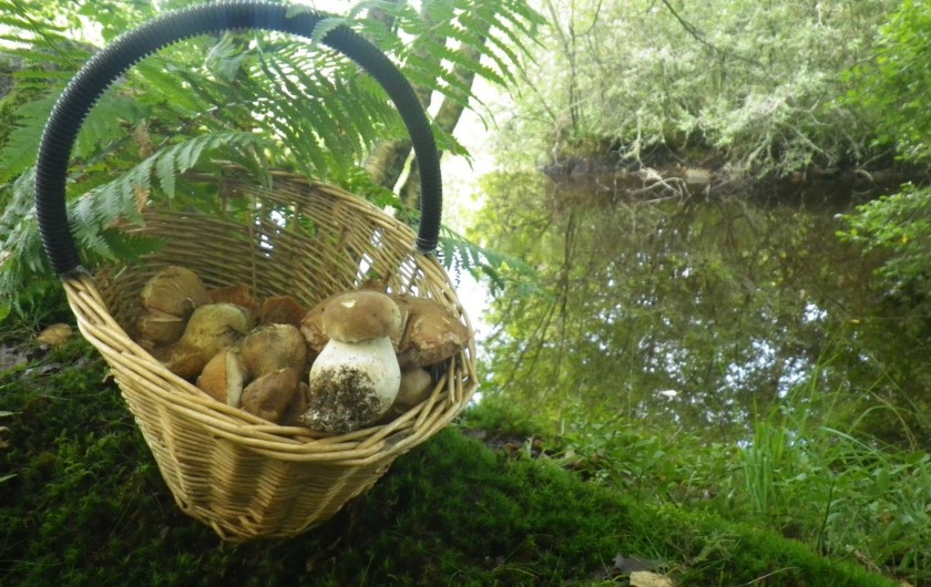 Location de vacances - Gîte à Valette - Pour les amoureux de balade automnales les champignons sont ici très nombreux.