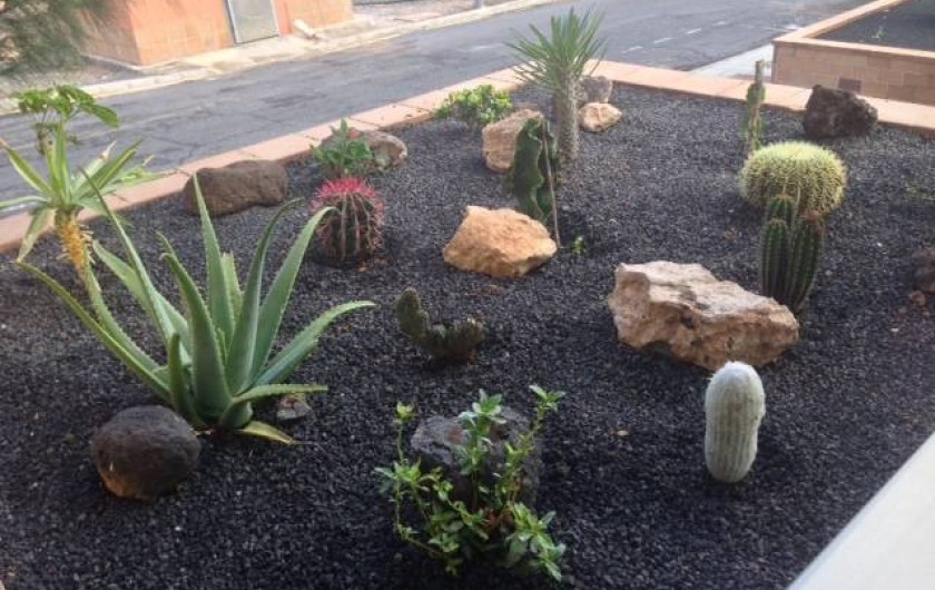 Location de vacances - Appartement à Morro Jable - Jardin de cactus de l´apartement
