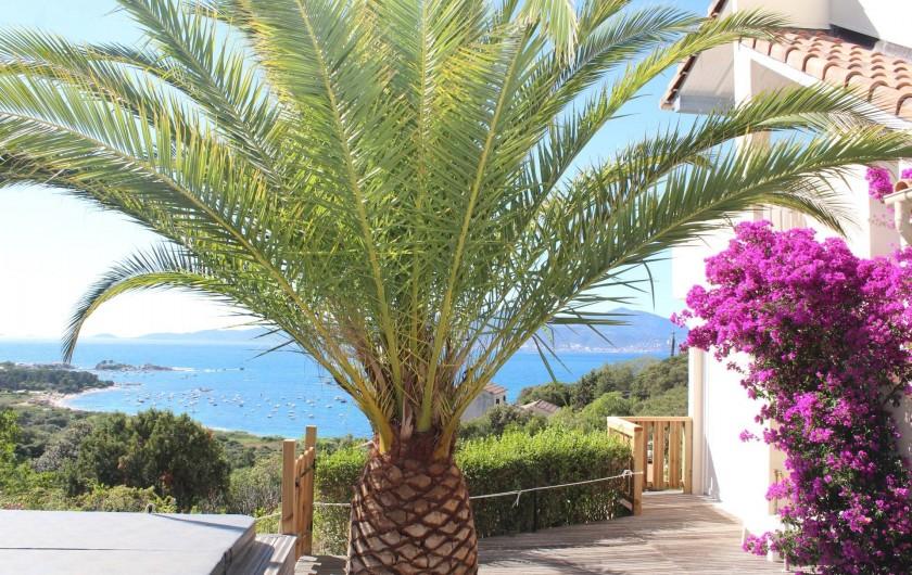 Location de vacances - Chambre d'hôtes à Porticcio - Espace SPA sous les palmes et les fleurs du bougainvillier