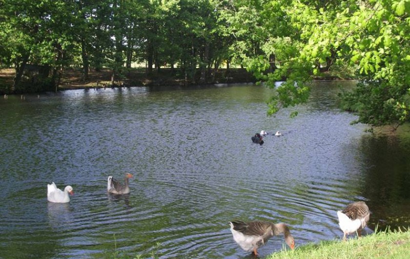 Location de vacances - Château - Manoir à Aubigné-Racan - L' étang poissonneux