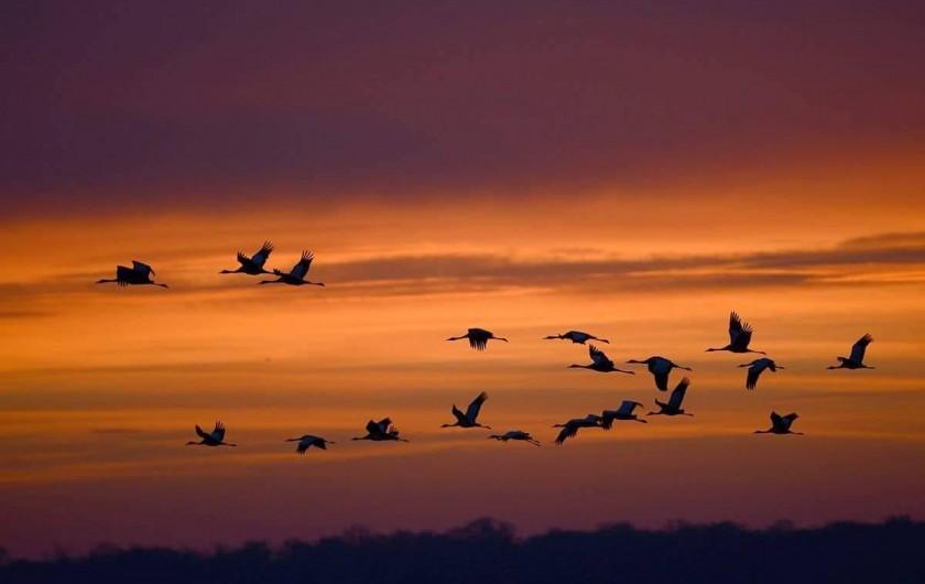 Location de vacances - Villa à Écollemont - Printemps et Automne des milliers d'oiseaux migrateurs.