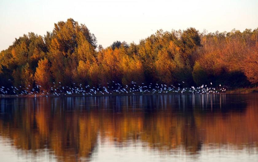 Location de vacances - Gîte à Meilhan-sur-Garonne - Aigrettes sur la Garonne