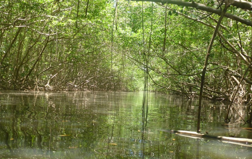 Location de vacances - Chambre d'hôtes à Sainte Rose - Ballade en kayak mangrove et rivière
