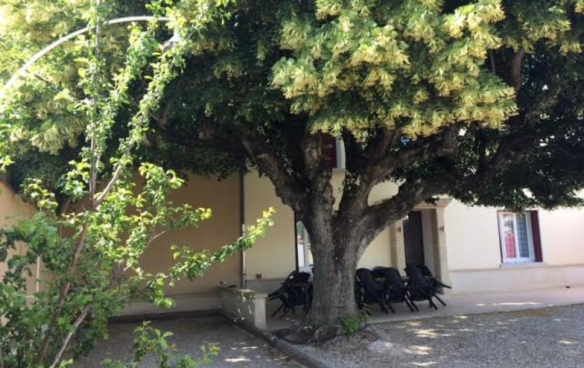 Location de vacances - Gîte à Carpentras - Piscine