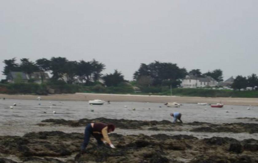 Location de vacances - Bungalow - Mobilhome à Kervoyal - pêche aux huîtres