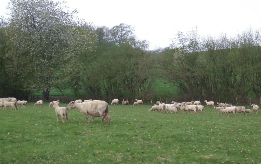 Location de vacances - Tipi à Saint-Vincent-en-Bresse - Vous serez entourés de moutons, de poules, des bois et prés !