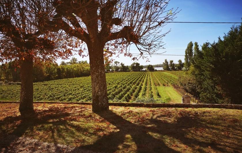 Location de vacances - Gîte à Bourg sur Gironde - Vue sur le vignoble et l'estuaire depuis le pavillon