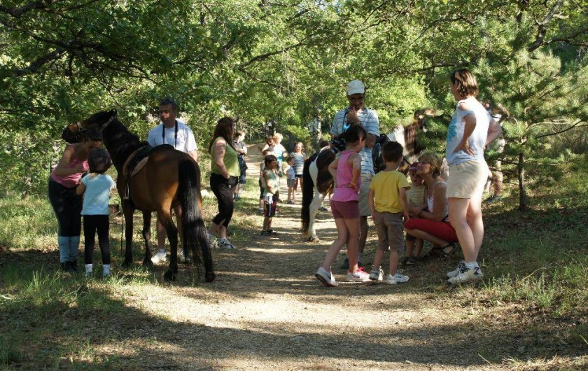 Location de vacances - Camping à Bauduen - Balade en poneys...