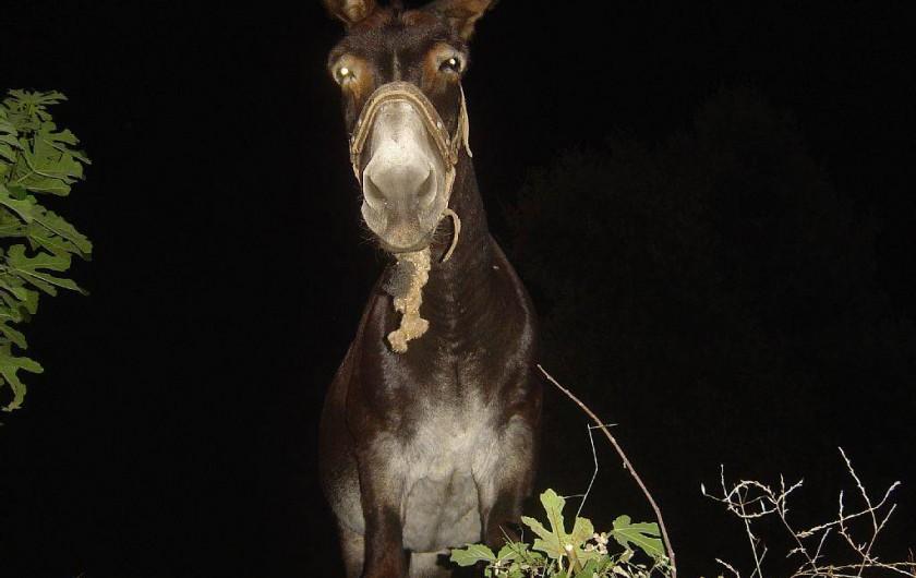 Location de vacances - Maison - Villa à Rapale - Un âne corse noctenbule
