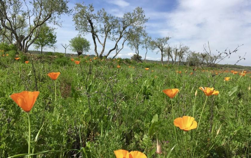 Location de vacances - Villa à Aigues-Vives - Aigues Vives Spring Poppys
