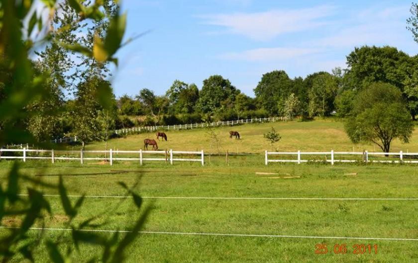 Location de vacances - Gîte à La Baconnière - Vue extérieure avec chevaux