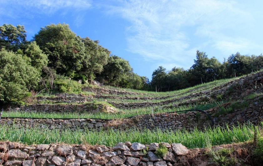 Location de vacances - Gîte à Notre-Dame-de-la-Rouvière - Terrasse de champs                  d' oignons doux prés du Mas