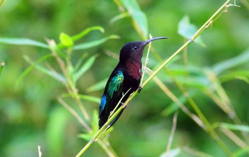Location de vacances - Bungalow - Mobilhome à Le François - l'un des nombreux colibris de la Route des épices.