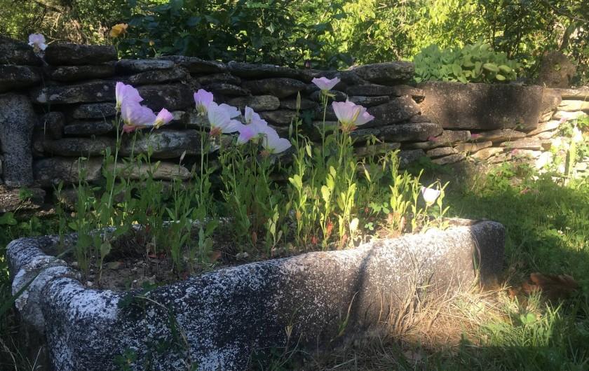 Location de vacances - Villa à Saignon - détail jardin