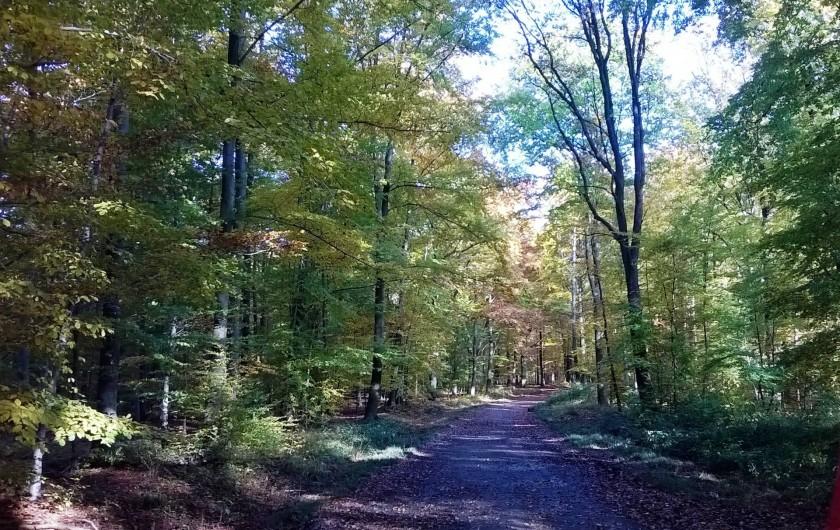 Location de vacances - Studio à Spa - Forêt à 100m