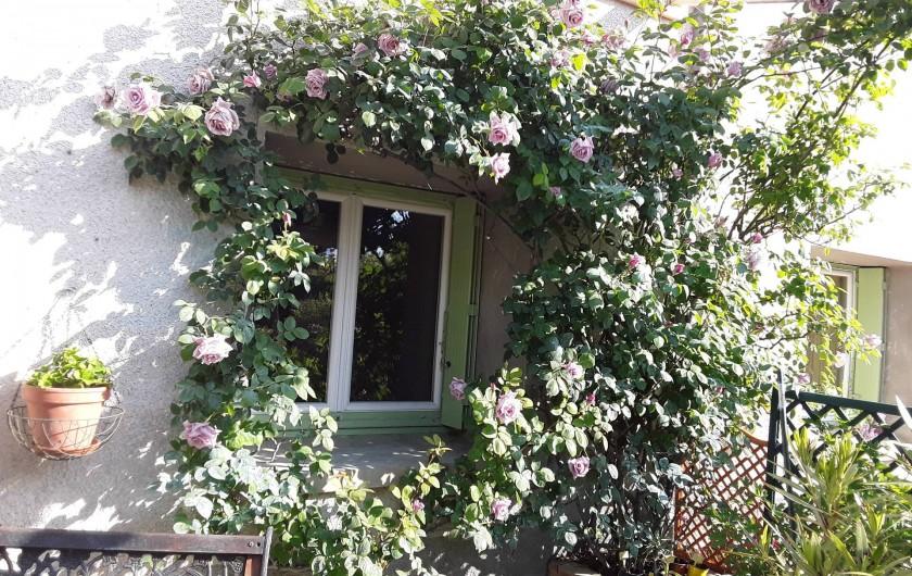 Location de vacances - Gîte à Salvagnac - Notre rosier bleu