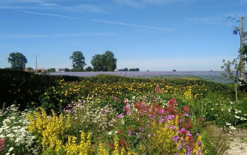 """Location de vacances - Gîte à Nibas - Fleurs face au gîte """"les coquelicots"""""""