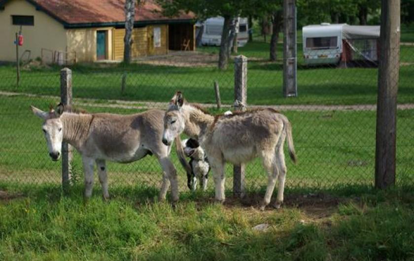 Location de vacances - Camping à Langogne - Le parc aux ânes et aux chevaux