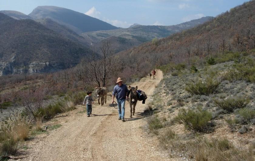 Location de vacances - Gîte à Ribiers - Des balades innombrables à partir de la Bergerie, avec ou sans nos ânes