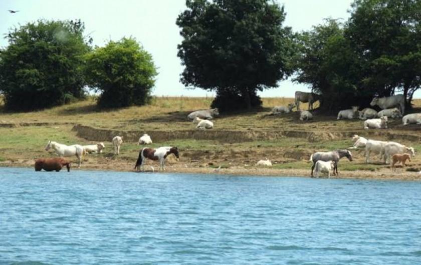 Location de vacances - Péniche à Mâcon - La faune