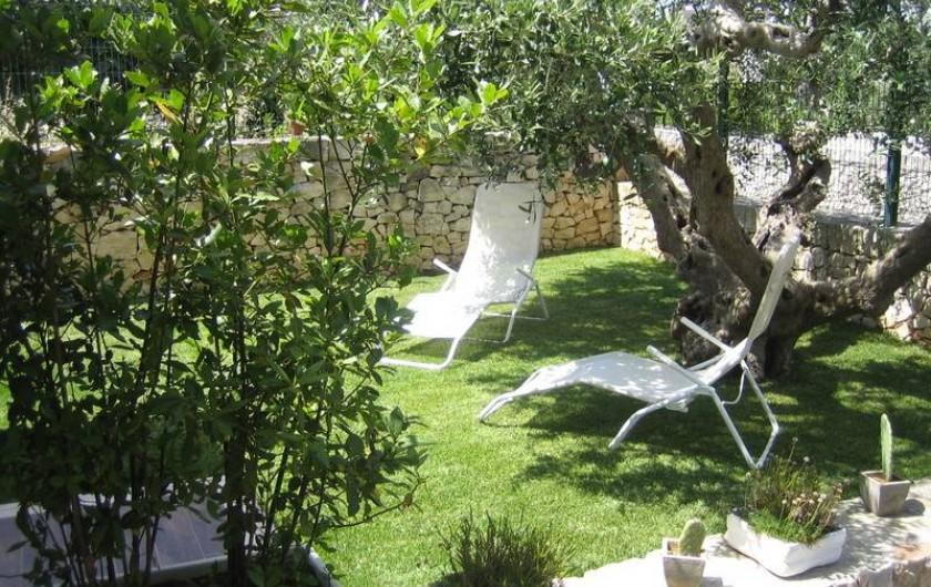Location de vacances - Maison - Villa à Alberobello - Jardin avec son olivier séculaire