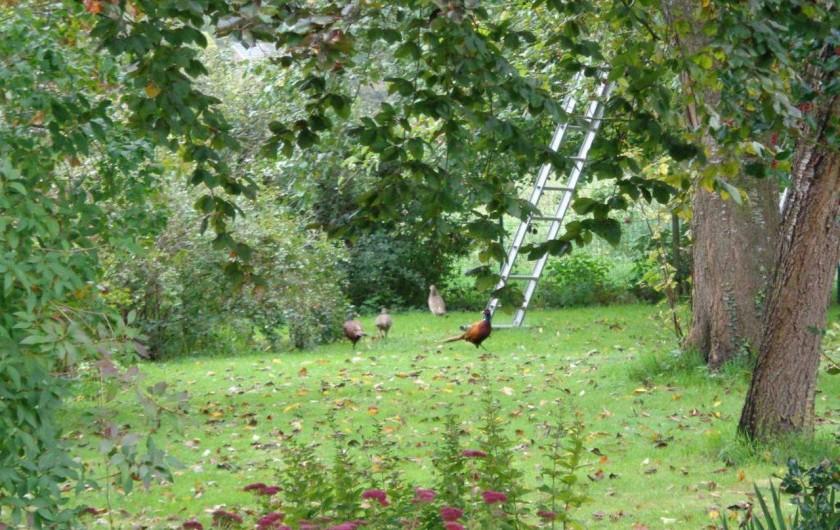 Location de vacances - Gîte à Mettet - La cueillette des pommes. A déguster!