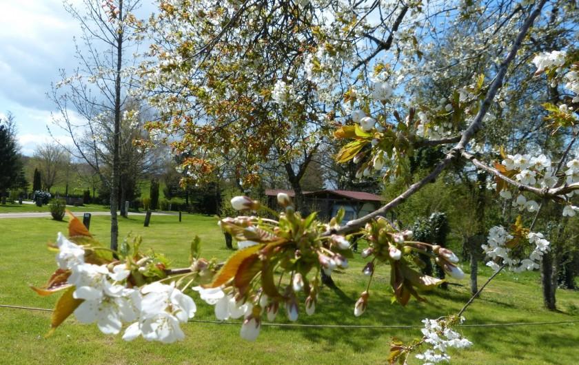 Location de vacances - Camping à Langres - Arbres fruitiers en fleurs au camping