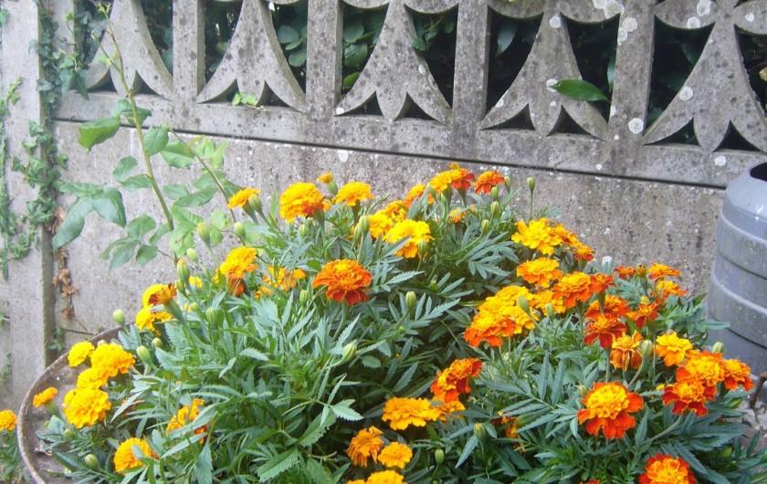 Location de vacances - Maison - Villa à Cléguérec - parterre de fleurs ,cour en façade