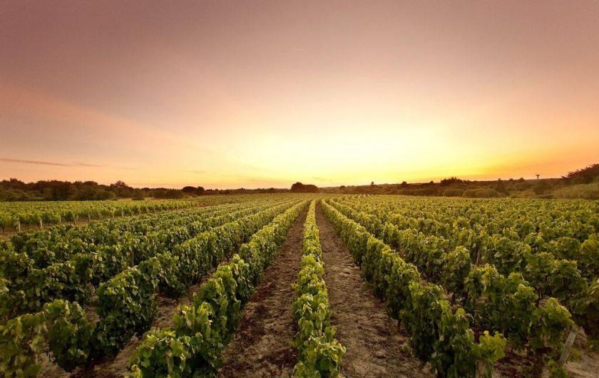Location de vacances - Gîte à Brem-sur-Mer - Vignoble de Brem : fief vendéen